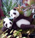 needle-felted panda by Olwen Veevers